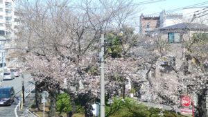 さよなら私のクラマー1巻 蕨の桜